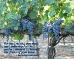 Red Grape Vines with Quote
