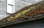Colorful Moss on Roof