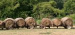 Old Round Hay Bales on Old Carts