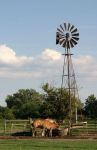 Draft Horses and Windmill at Watering Trough