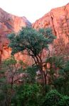 Temple Of Sinawava, Zion National Park, UT