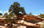 Rock Formation and Trees, Capitol Reef National Park