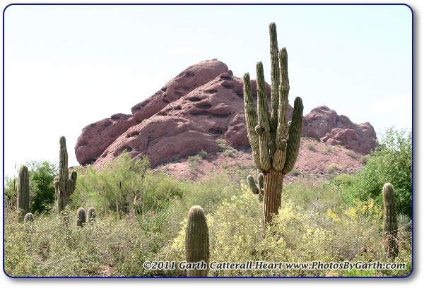 saguaro cactus and papago butte